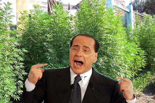 Berlusconi no le gusta la marihuana del reggae