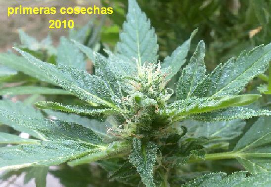 primeras cosechas del 2010