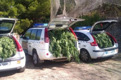 Un bosque de marihuana