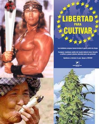 COMO CREAR UN CLUB SOCIAL DE CANNABIS